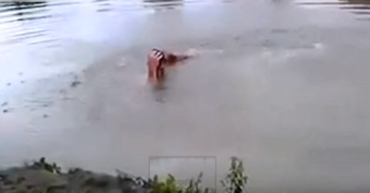 dog saves drowning owner