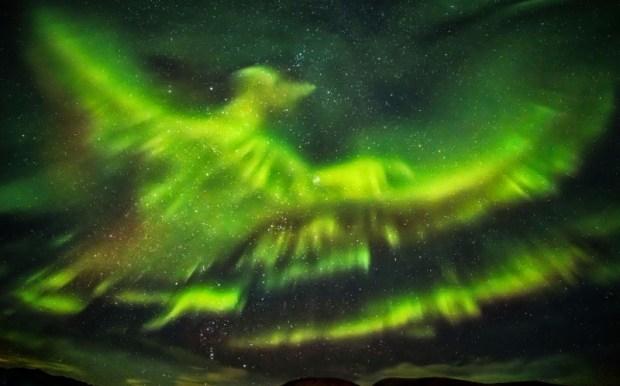 giant phoenix