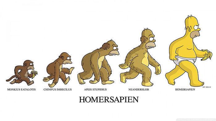 human evolution 11