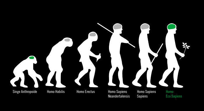 human evolution 13