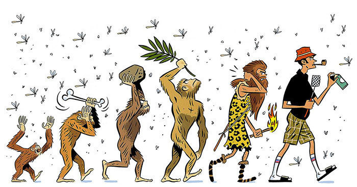 human evolution 15