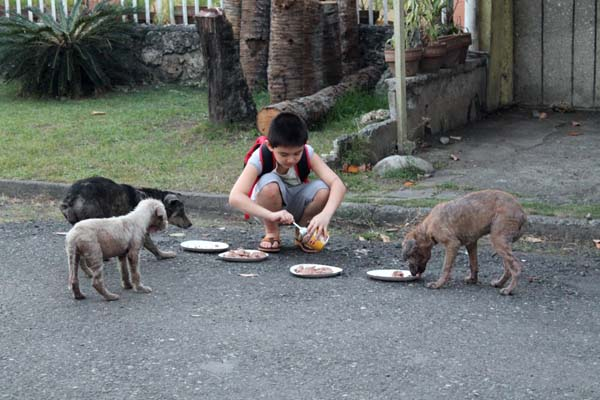 kid feeds dogs