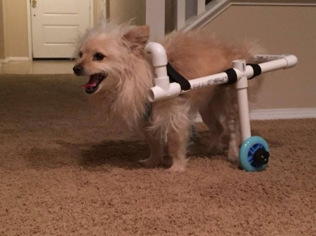 man build wheelchair for puppy