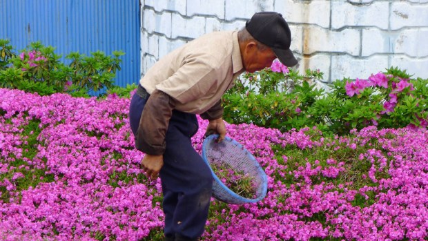man planting flowers to blind wife