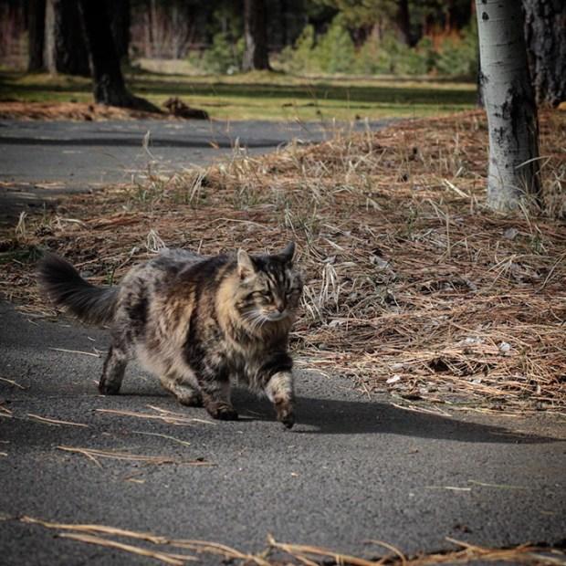 oldest cat