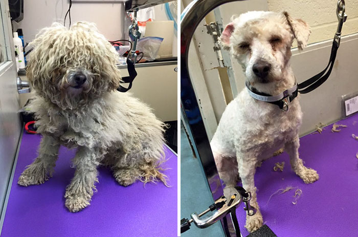 shelter dogs free haircut 6