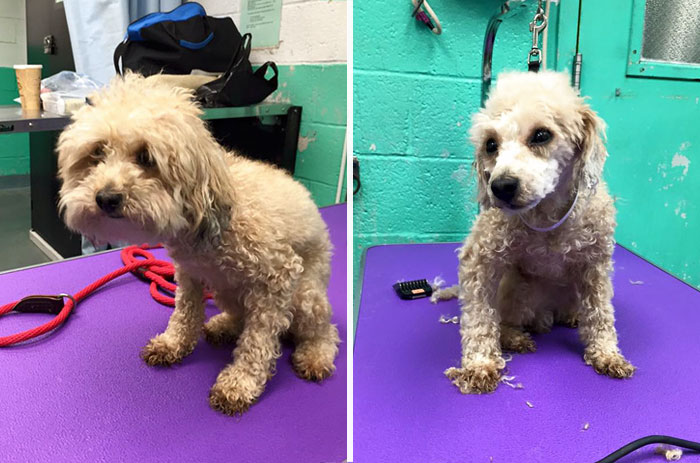 shelter dogs free haircut 8