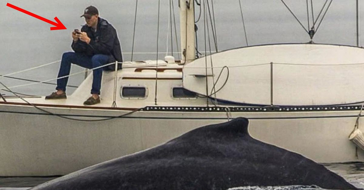 texting man misses whale while texting