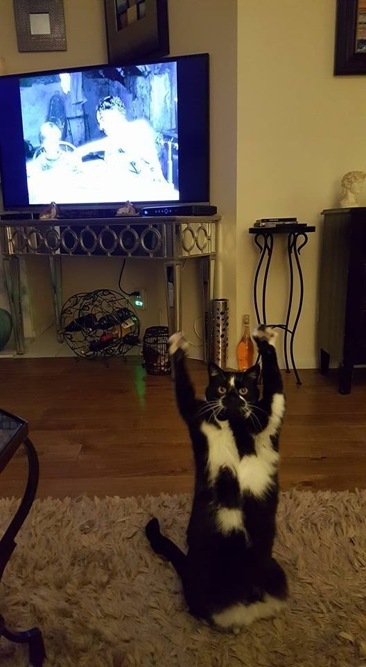 cat throwing paws in the air
