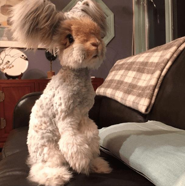 cutest bunny