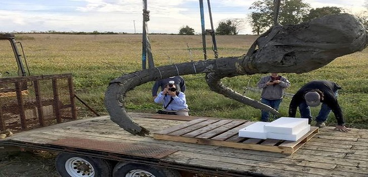 farmer found mammoth bones