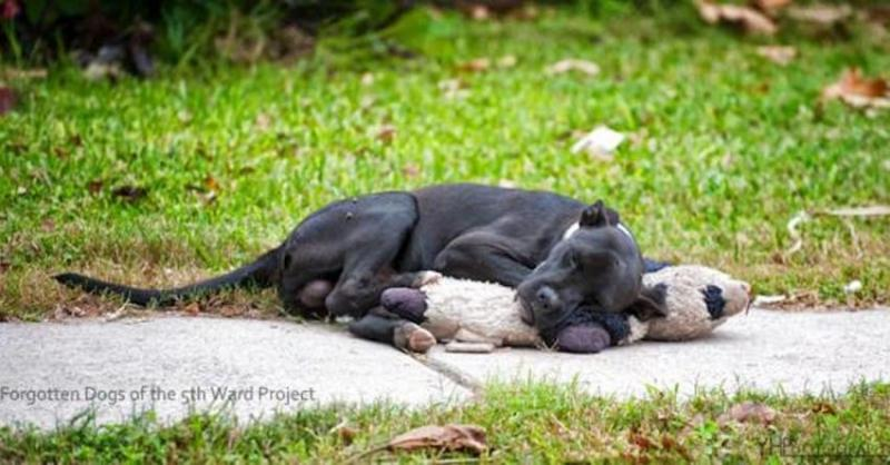 homeless dog with a toy