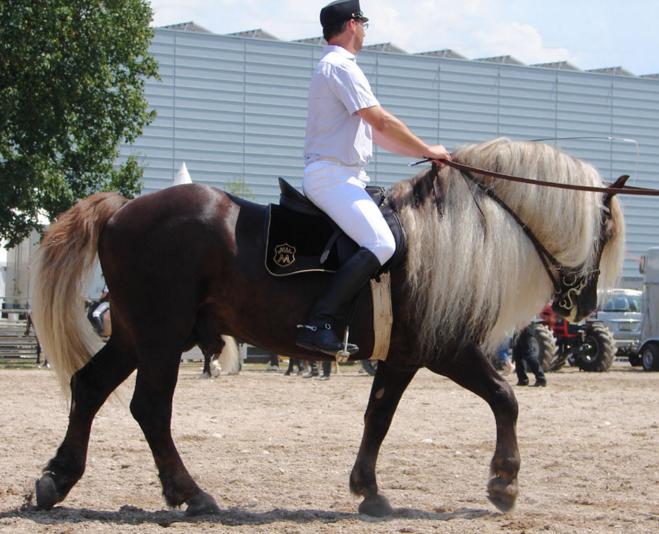 horses unusual colors