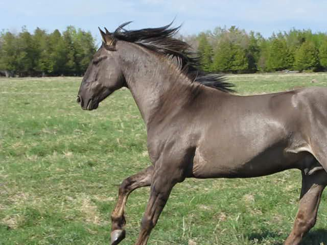 Most beautiful horse in the world 2018 turkey