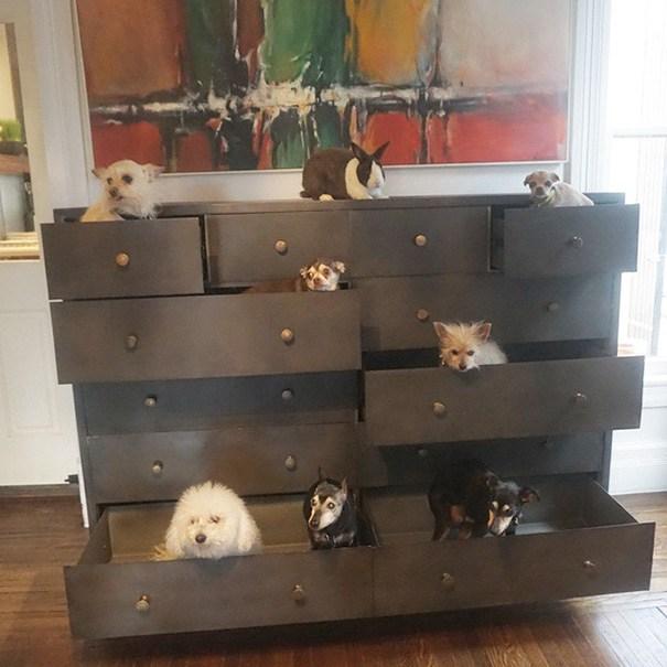 man adopts dogs