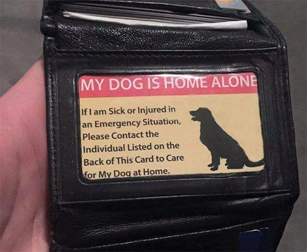 pet care card