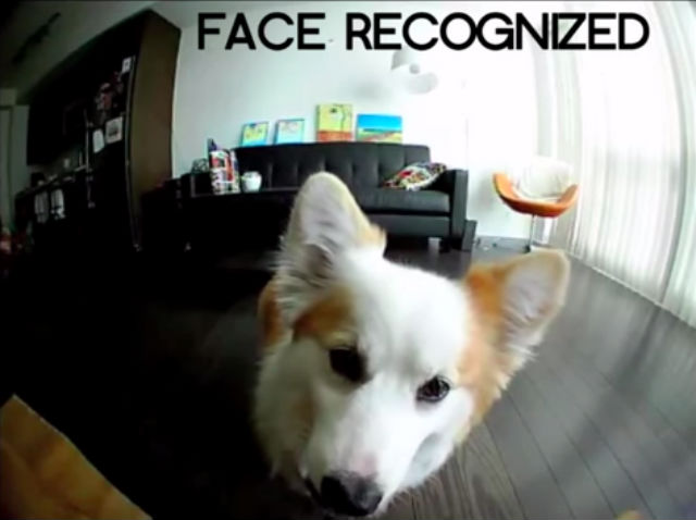 smartphone for your pet