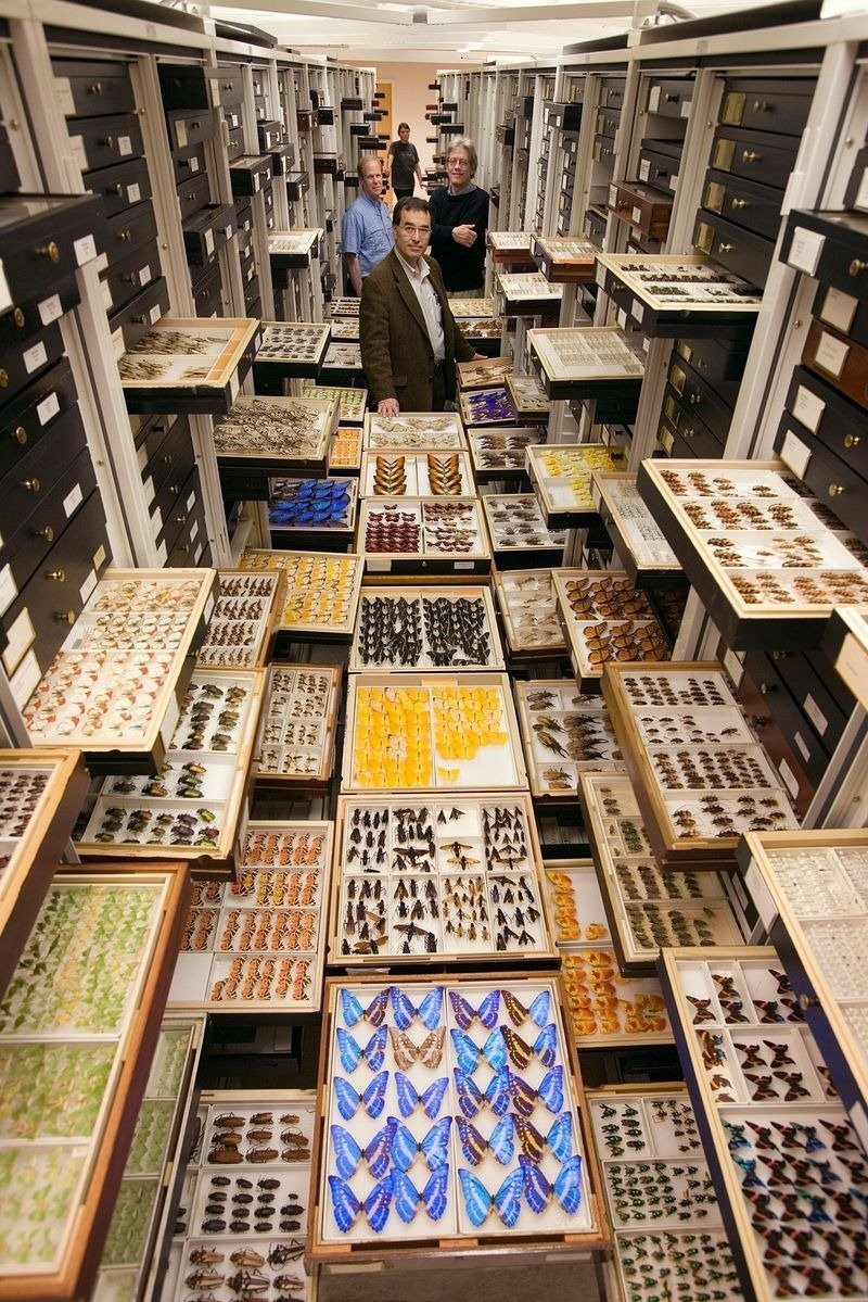 smithsonian national museum storage