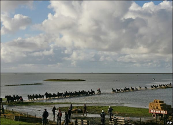 trapped horses in islands