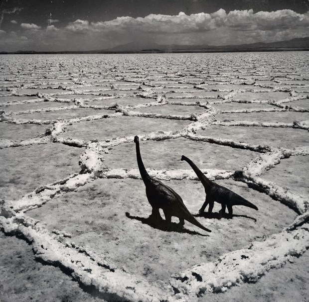 travel photos with dinosaur toys