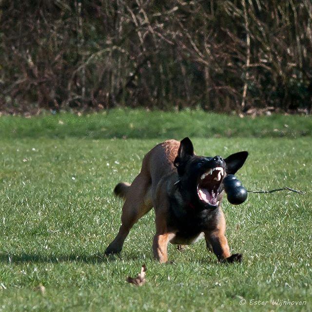 Dog Destroys Their Toys