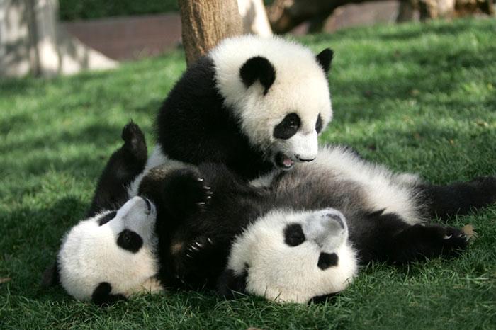 Home of Panda