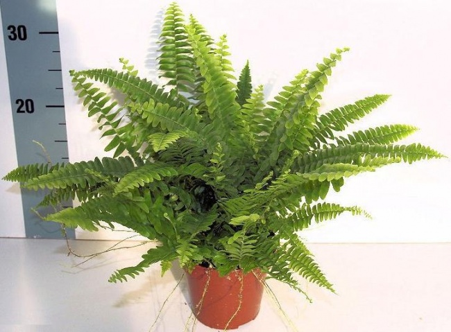 These Houseplants Can Effectively Clean The Air You ...