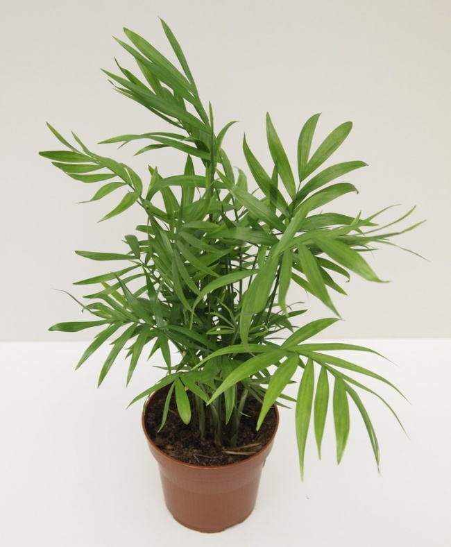 These Houseplants Can Effectively Clean The Air You