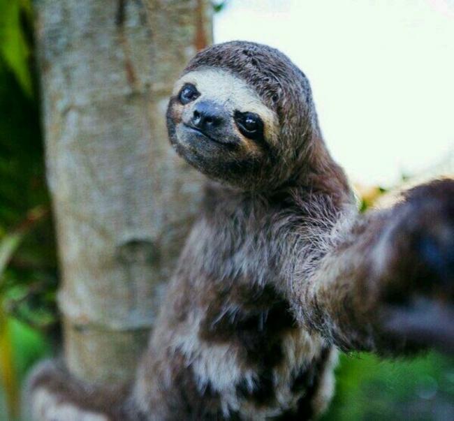 animal selfie game