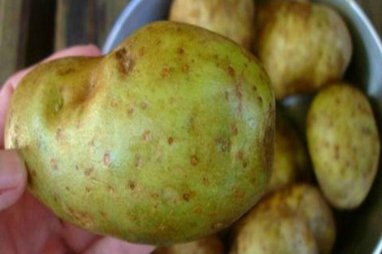 bad potatoes
