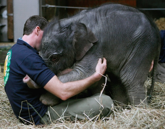 delightful animals