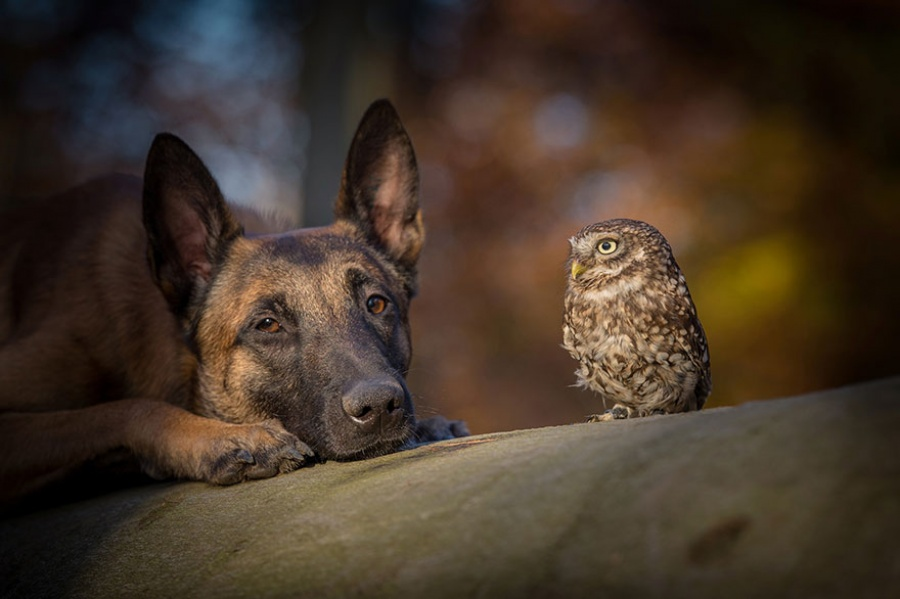 dog and owl friends