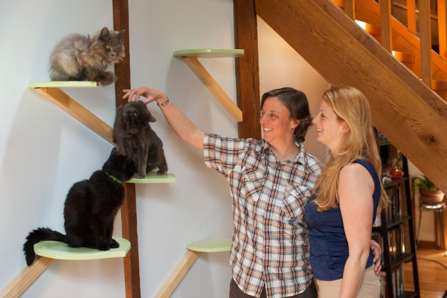 house transforms into cat paradise