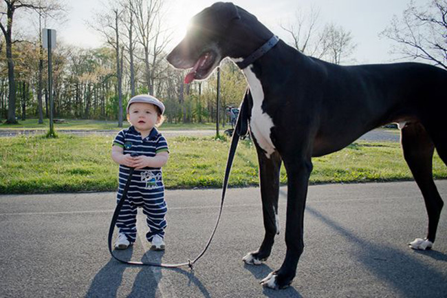 relationship between kids and dogs