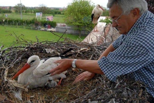 storks live roof