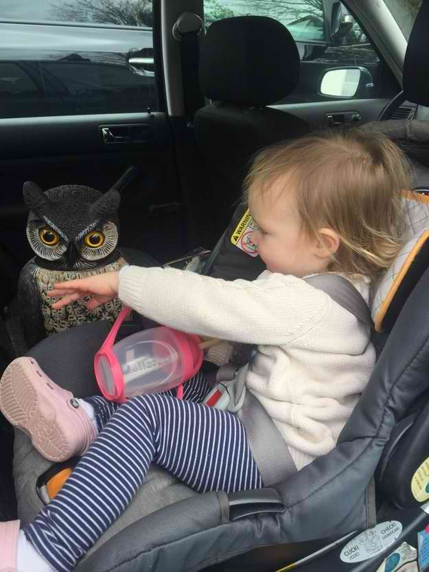 toddler bestfriend scary lawn owl