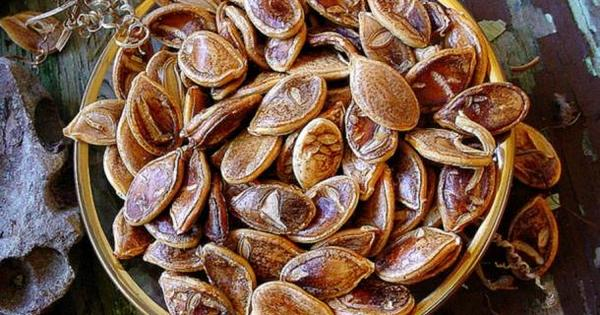 800 year old seeds