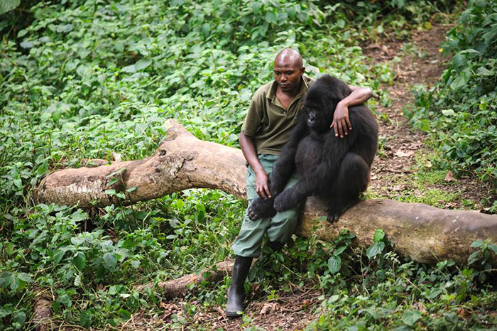 Park Ranger comfort gorillas