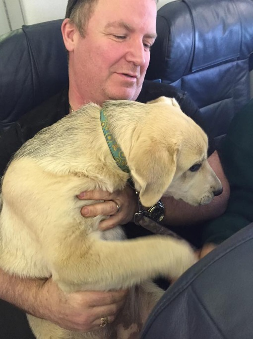airline allows passengers to bring dogs