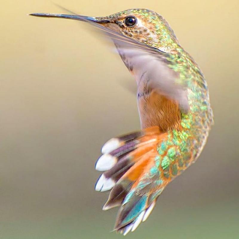 beauty of hummingbirds