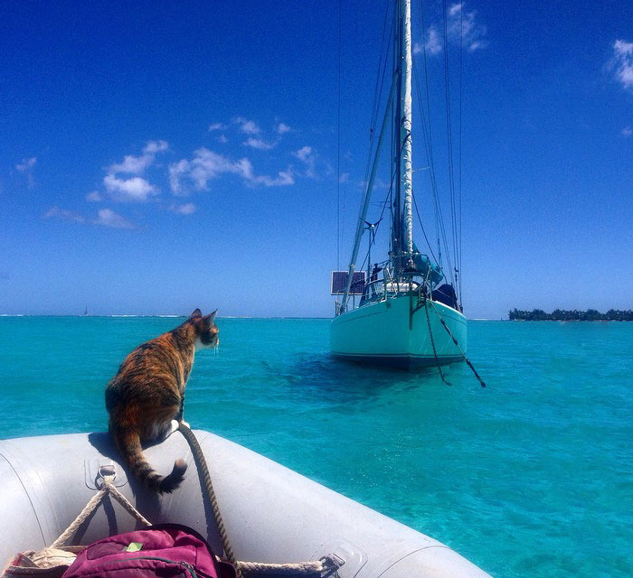 cat sails around the world