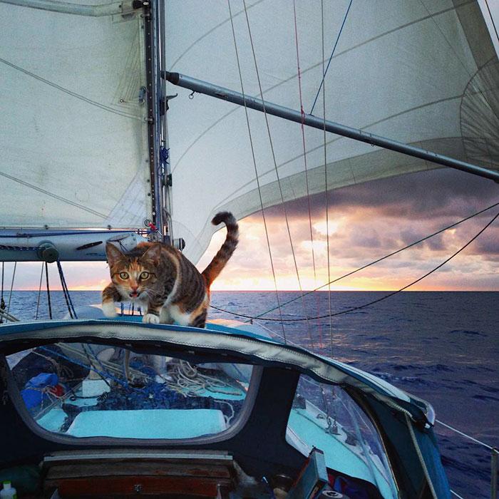 cat sails around the world