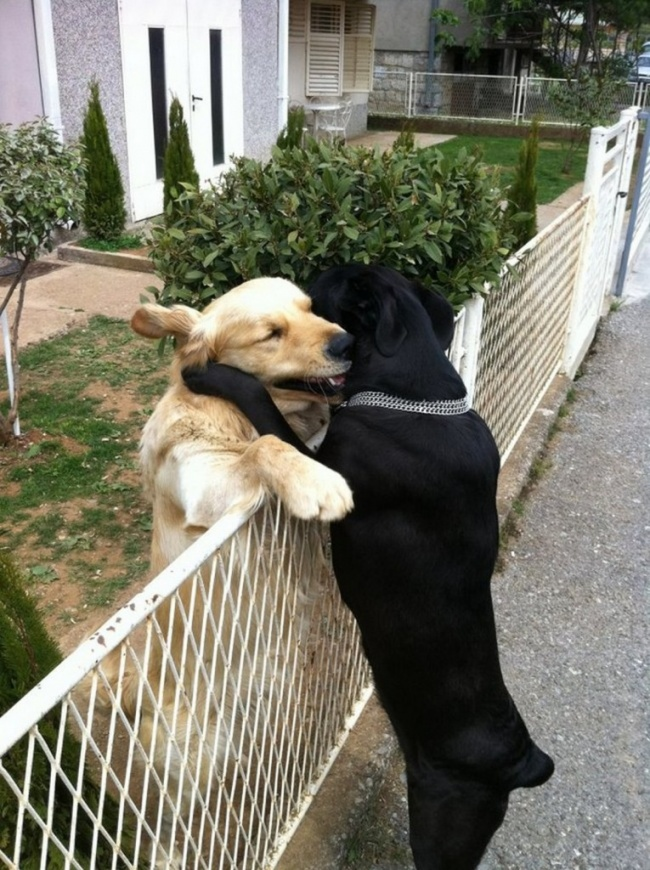 everyone should hug each other