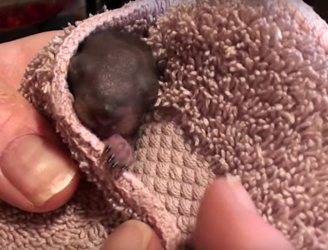man saves baby squirrels