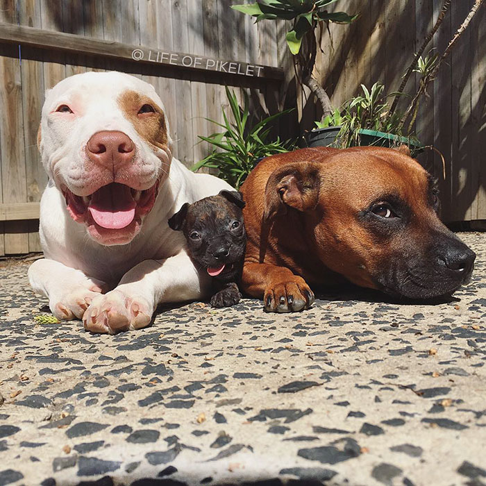 rescue dog adopts new