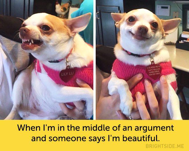 dog facial expressions 1