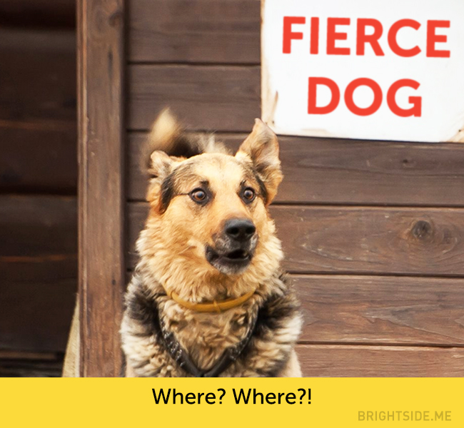 dog facial expressions 10