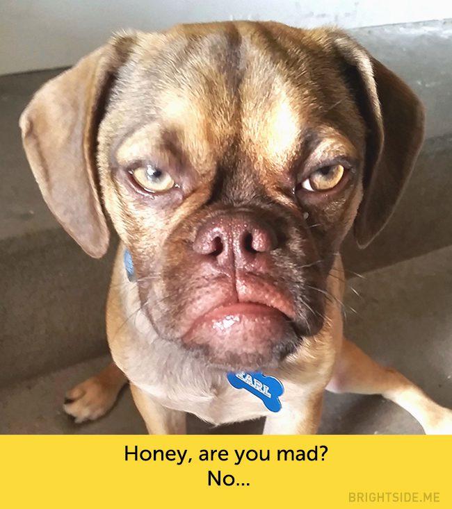 dog facial expressions 12