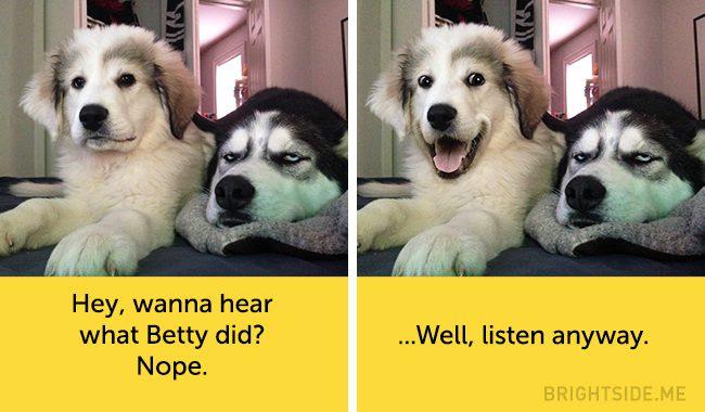 dog facial expressions 15