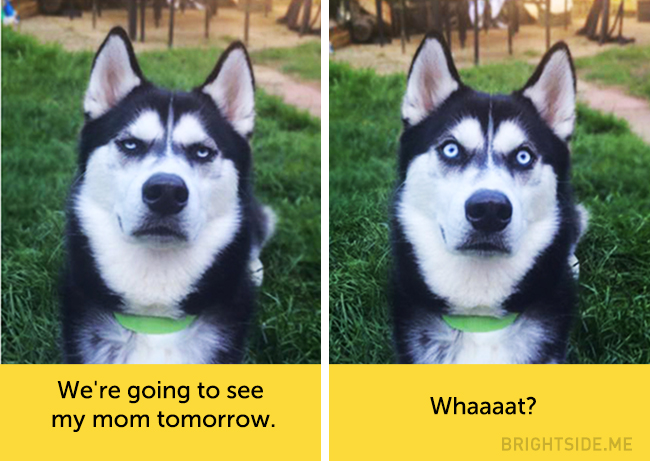 dog facial expressions 3